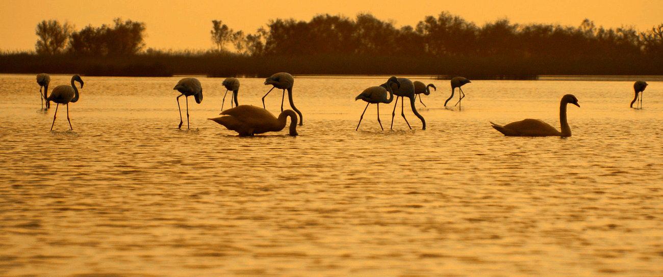 Fenicotteri al tramonto sul Delta dell'ebro