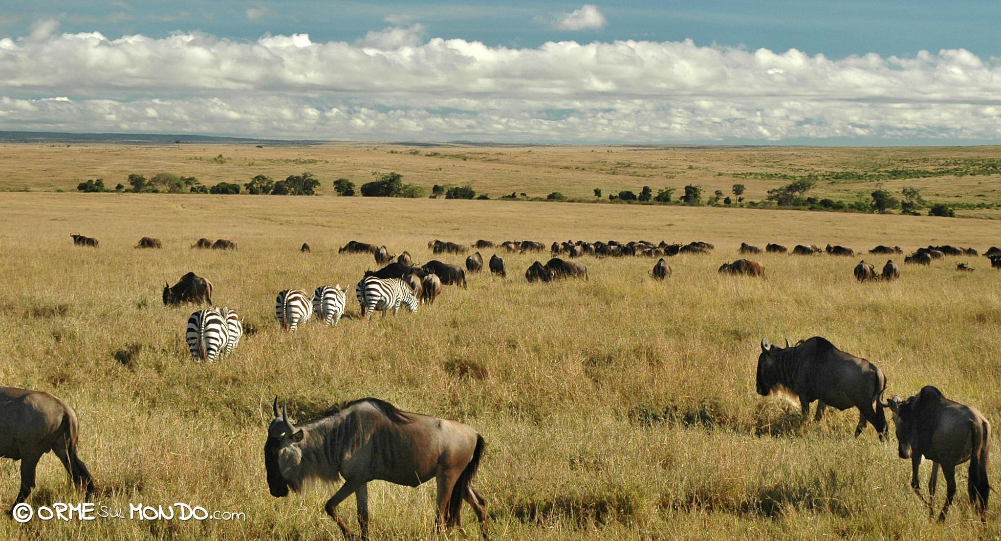 riserva masai mara migrazione gnu