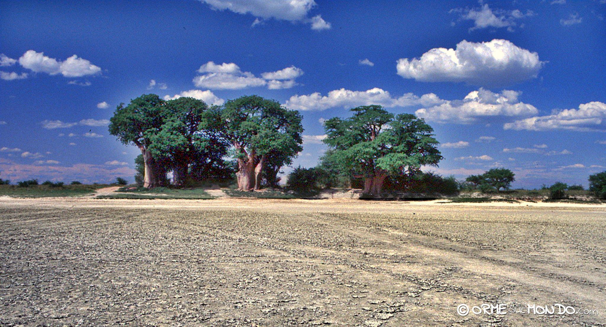 I famosi Baines' Baobabs dove ci accamperemo per la notte