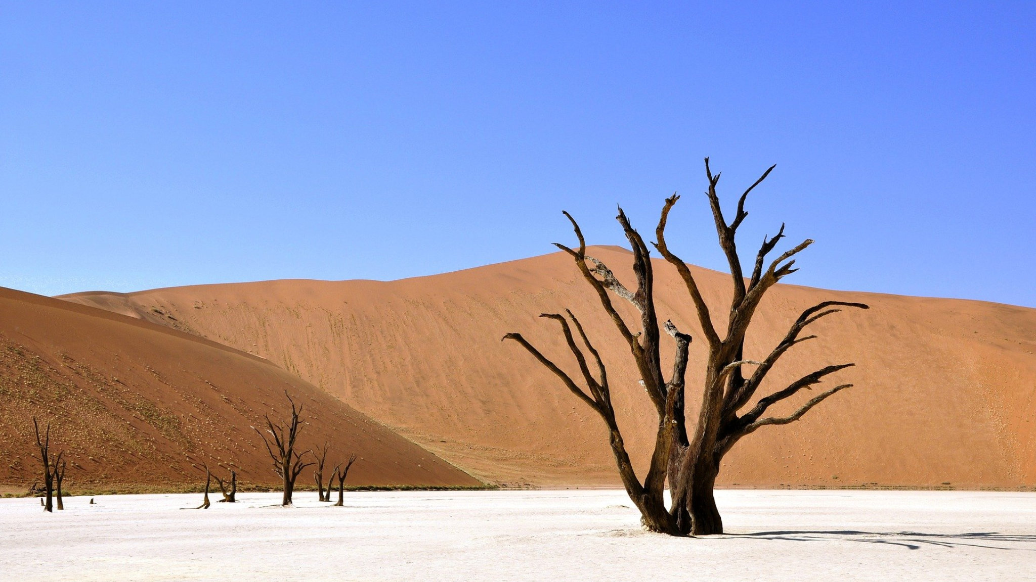 duna albero secco namibia