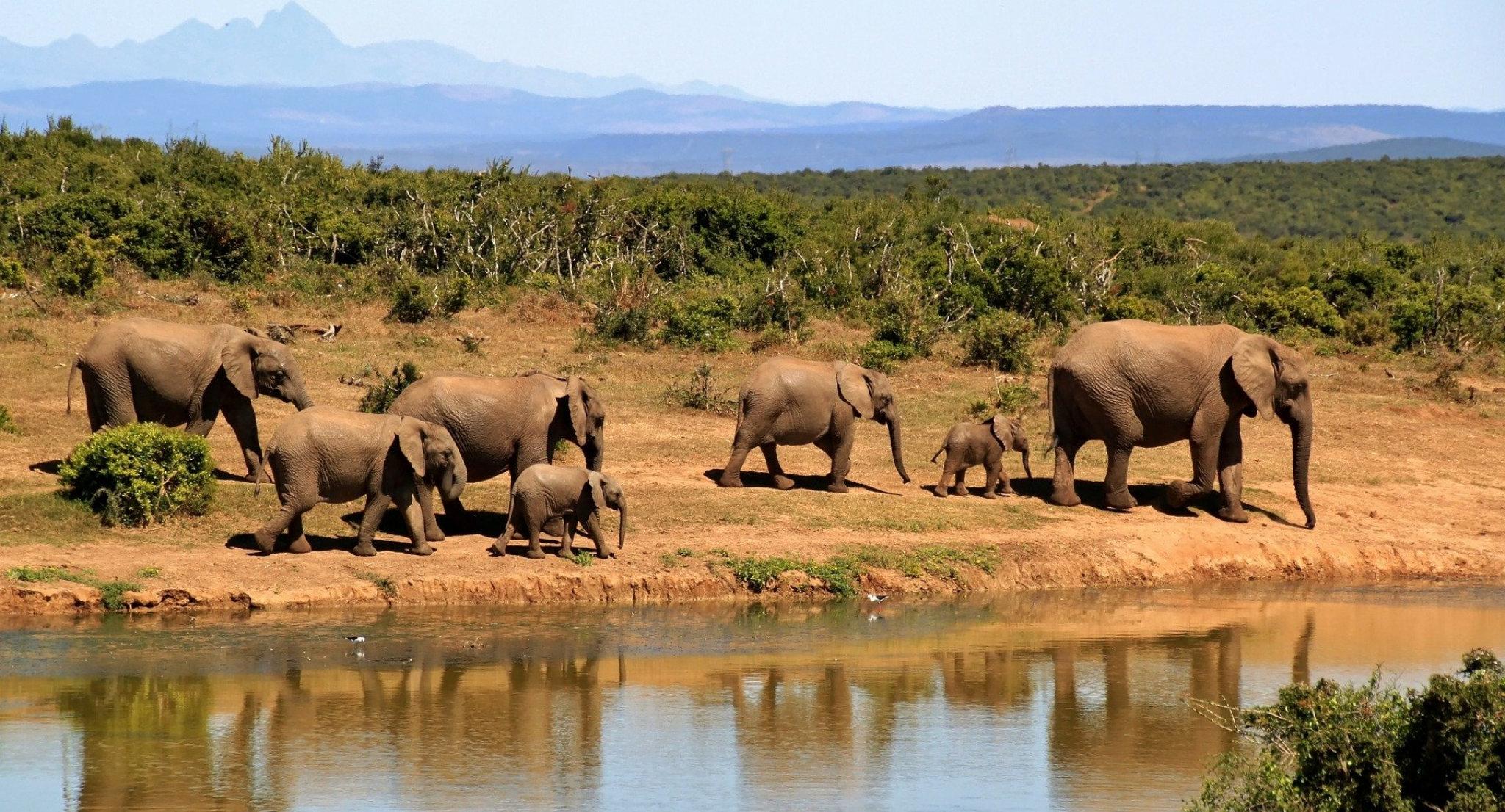 Elefanti si abbeverano lungo la strada per il Chobe National Park