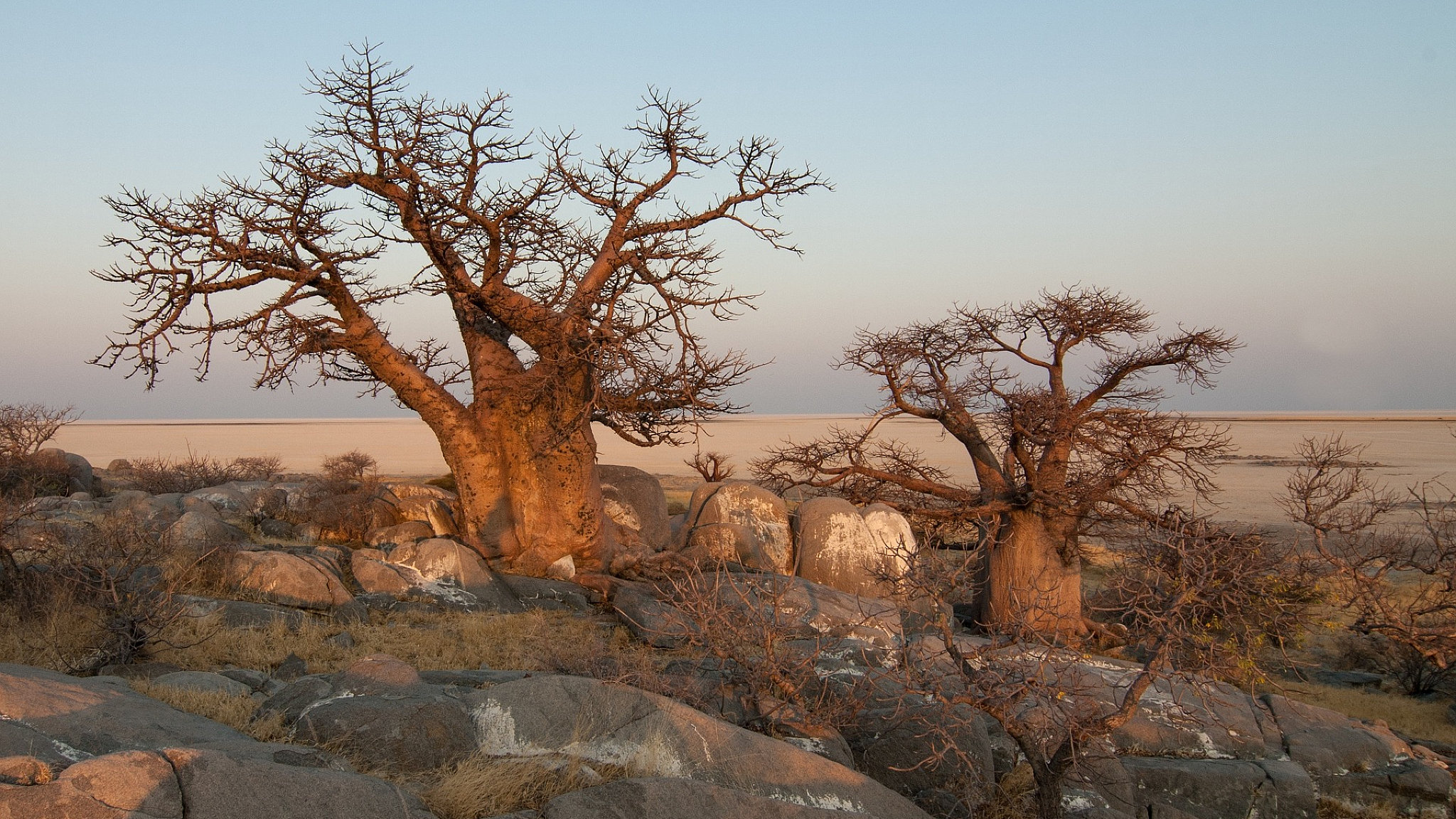 panorma namibia piante grasse featured